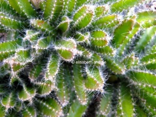 Cactus_4860