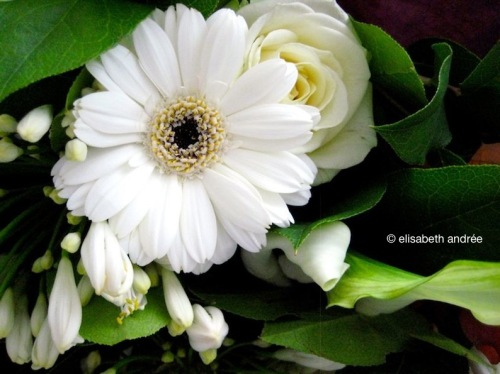 White_flowers_9695