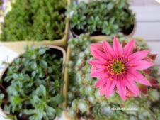 small garden plants in pots