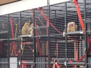 quarantine, hoping for better times