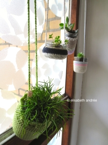 plant and plant cuttings