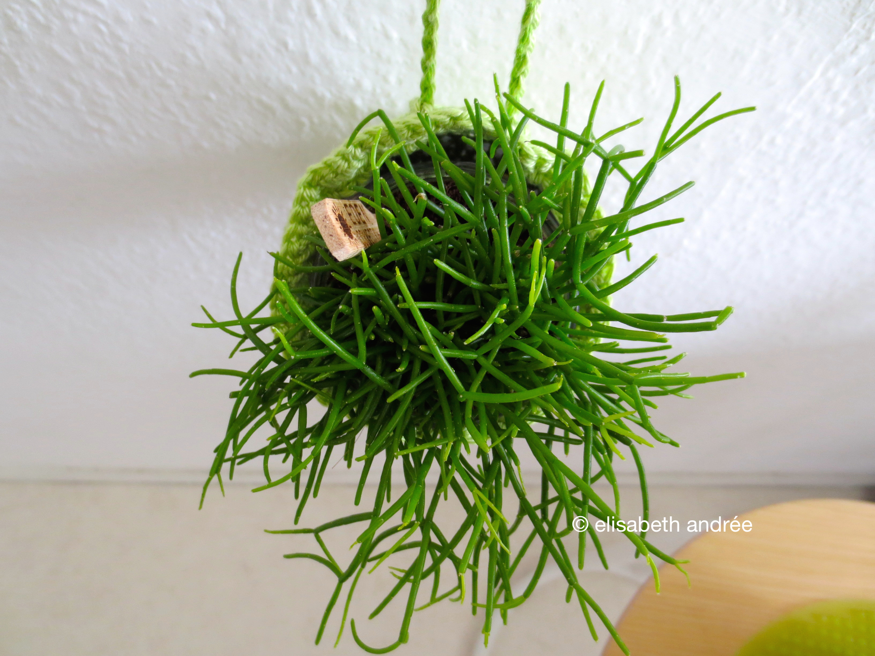 How To Crochet A Planthanger Elisabeth Andr 233 E