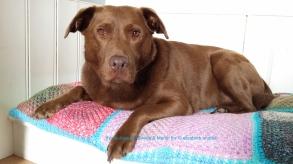 beautiful and sweet joya on her new crochet cushion
